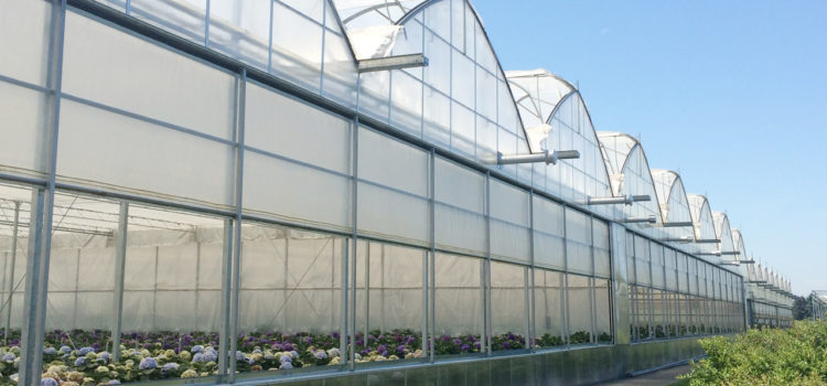 Greenhouse Ventilation Tips